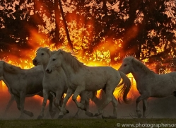 camargue-horses-extension-copyright-photographers-on-safari-com-9453