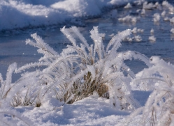 frost-4238-capercaille-copyright-photographers-on-safari-com