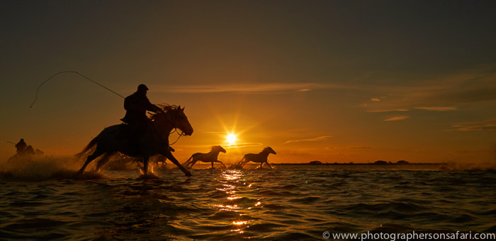 Camargue Horses 2015 -36copyright-photographers-on-safari-com
