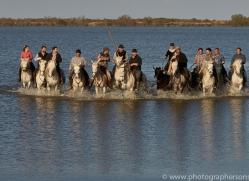 black-bulls-copyright-photographers-on-safari-com-8318