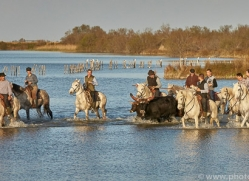 black-bulls-copyright-photographers-on-safari-com-8321
