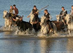 black-bulls-copyright-photographers-on-safari-com-8322