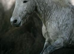 camargue-white-horses1183-camargue-copyright-photographers-on-safari-com