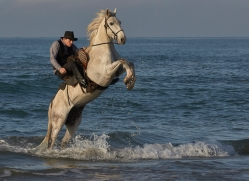 white-horses-camargue-copyright-photographers-on-safari-com-8360