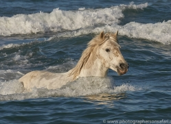 white-horses-camargue-copyright-photographers-on-safari-com-8362