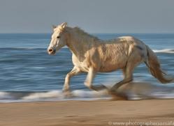 white-horses-camargue-copyright-photographers-on-safari-com-8363