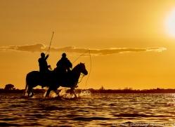 white-horses-camargue-copyright-photographers-on-safari-com-8374
