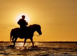 white-horses-camargue-copyright-photographers-on-safari-com-8375