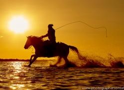 white-horses-camargue-copyright-photographers-on-safari-com-8376
