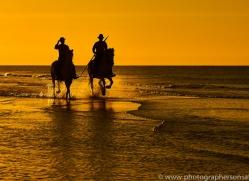 white-horses-camargue-copyright-photographers-on-safari-com-8381