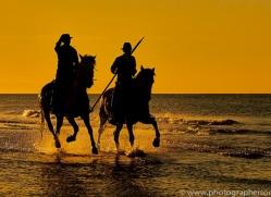 white-horses-camargue-copyright-photographers-on-safari-com-8382