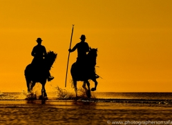white-horses-camargue-copyright-photographers-on-safari-com-8383