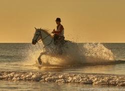 white-horses-camargue-copyright-photographers-on-safari-com-8384