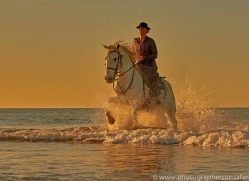 white-horses-camargue-copyright-photographers-on-safari-com-8385