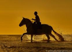 white-horses-camargue-copyright-photographers-on-safari-com-8386