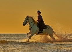 white-horses-camargue-copyright-photographers-on-safari-com-8387