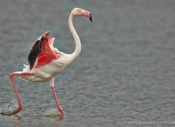 grey-heron-1080-camargue-copyright-photographers-on-safari-com
