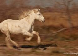 grey-heron-1083-camargue-copyright-photographers-on-safari-com