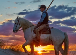Camargue Horses 2015 -43copyright-photographers-on-safari-com