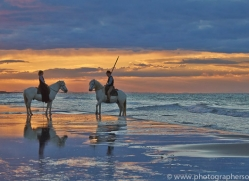 Camargue Horses 2015 -45copyright-photographers-on-safari-com