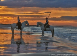 Camargue Horses 2015 -46copyright-photographers-on-safari-com