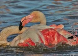 Flamingo 2015 -7copyright-photographers-on-safari-com