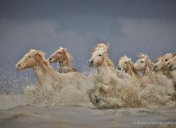 grey-heron-1046-camargue-copyright-photographers-on-safari-com