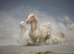 grey-heron-1048-camargue-copyright-photographers-on-safari-com