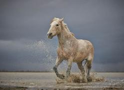 grey-heron-1049-camargue-copyright-photographers-on-safari-com
