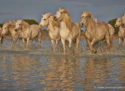 grey-heron-1065-camargue-copyright-photographers-on-safari-com