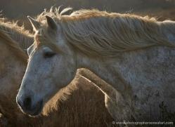 grey-heron-1071-camargue-copyright-photographers-on-safari-com