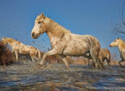 grey-heron-1072-camargue-copyright-photographers-on-safari-com