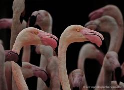 grey-heron-1082-camargue-copyright-photographers-on-safari-com