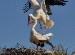 stork-copyright-photographers-on-safari-com-8335