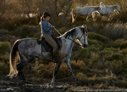 white-horses-camargue-copyright-photographers-on-safari-com-8359