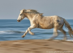 white-horses-camargue-copyright-photographers-on-safari-com-8371
