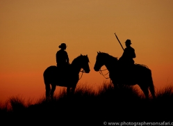 white-horses-camargue-copyright-photographers-on-safari-com-8378
