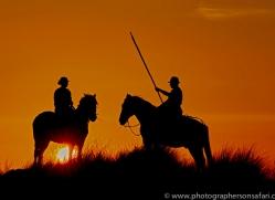 white-horses-camargue-copyright-photographers-on-safari-com-8379