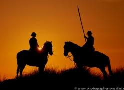 white-horses-camargue-copyright-photographers-on-safari-com-8380
