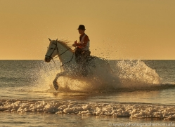 white-horses-camargue-copyright-photographers-on-safari-com-8384