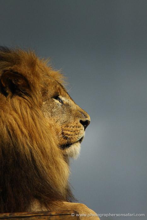 paul-spencer-5459-copyright-photographers-on-safari-com