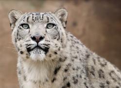 allison-devine-5457-copyright-photographers-on-safari-com