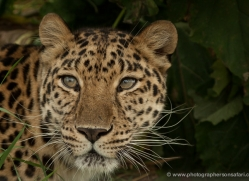 amanda-fallen-5555-copyright-photographers-on-safari-com