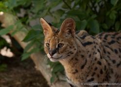 amanda-fallen-5556-copyright-photographers-on-safari-com
