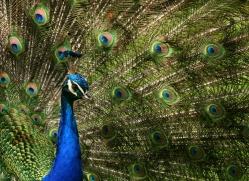 angela-karney-5328-copyright-photographers-on-safari-com