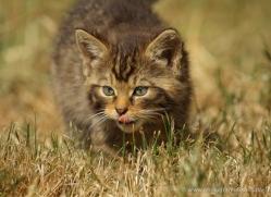 anthony-denchfield-5334-copyright-photographers-on-safari-com