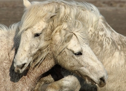 brian-helsdon-5340-copyright-photographers-on-safari-com