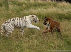 carolyn-headley-5343-copyright-photographers-on-safari-com