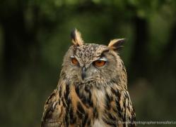 carolyn-headley-5345-copyright-photographers-on-safari-com