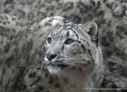 charis-white-5569-copyright-photographers-on-safari-com